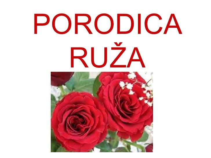 PORODICA  RUŽA