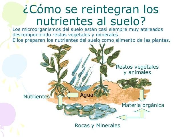 Por qu es importante cuidar el suelo 2 for Como cuidar las plantas ornamentales