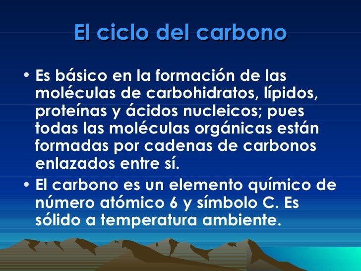 El ciclo del carbono <ul><li>Es básico en la formación de las moléculas de carbohidratos, lípidos, proteínas y ácidos nucl...