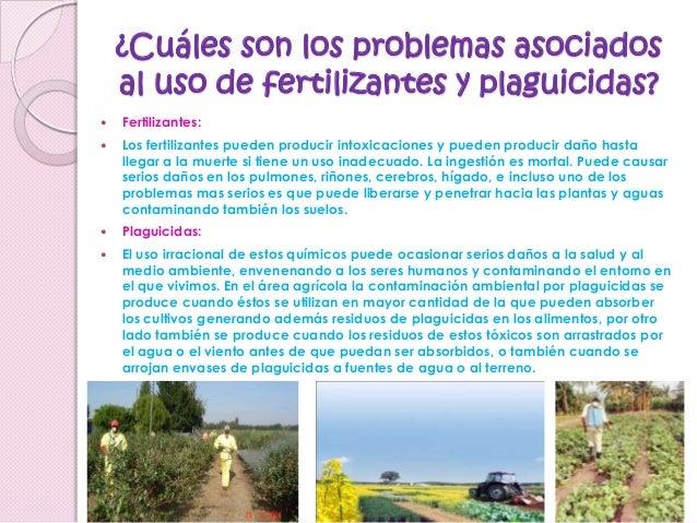 Porqu usamos fertilizantes y plaguicidas for Que son cultivos asociados