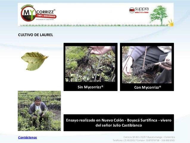 Portafolio mycorrizz for Viveros en maldonado