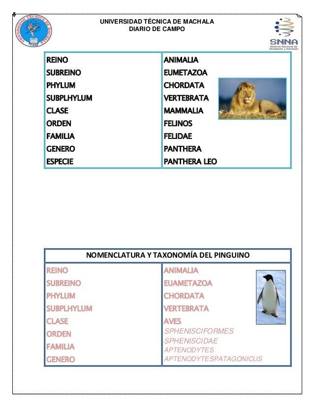 Portafolio biologia for Taxonomia de la jirafa