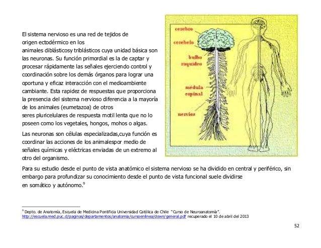 Portafolio de evidencias Materia Anatomia