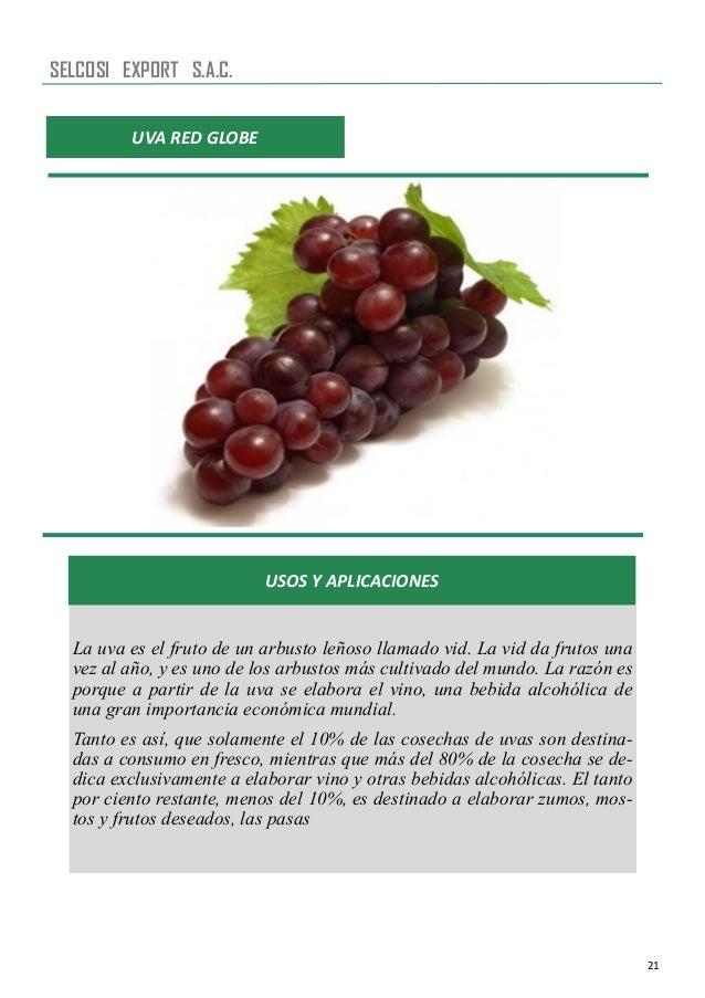 21 UVA RED GLOBE USOS Y APLICACIONES La uva es el fruto de un arbusto leñoso llamado vid. La vid da frutos una vez al año,...