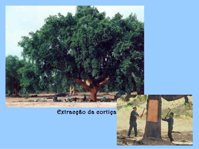 P O R T A L E G R E Parte II Imagens : Internet Formatação : mfariarodrigues Fevereiro – 2008