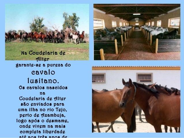 Na Coudelaria de Alter garante-se a pureza do cavalo lusitano. Os cavalos nascidos na Coudelaria de Alter são enviados par...