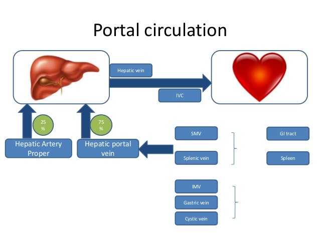 Portal circulation Hepatic vein  IVC  25 %  Hepatic Artery Proper  75 %  Hepatic portal vein  SMV  GI tract  Splenic vein ...