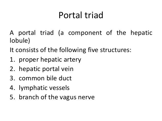 Portal triad A portal triad (a component of the hepatic lobule) It consists of the following five structures: 1. proper he...