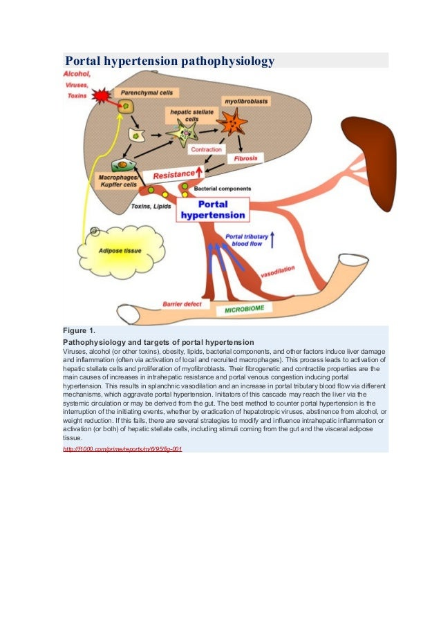 Portal hypertension pathophysiology