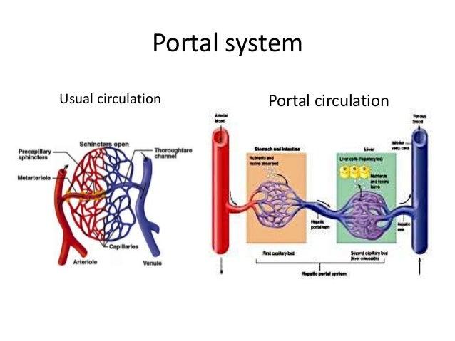 hepatic portal vein and portocaval anatomosis, Human body