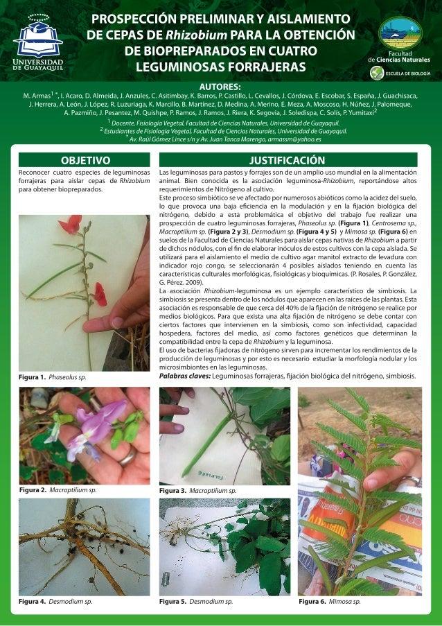 PÓSTER CIENTÍFICO PRESENTADO EN LAS JORNADAS DE BIOLOGÍA