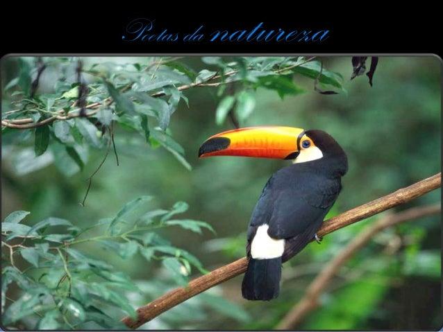 Poetas da   natureza