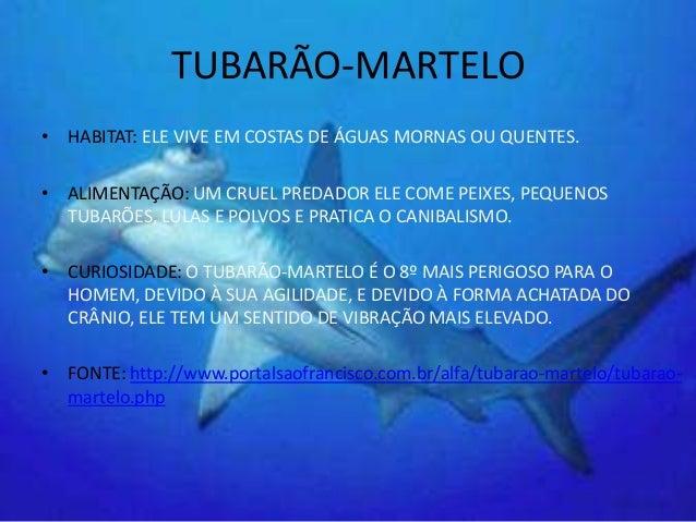 Portfolio do projeto animais marinhos 2013