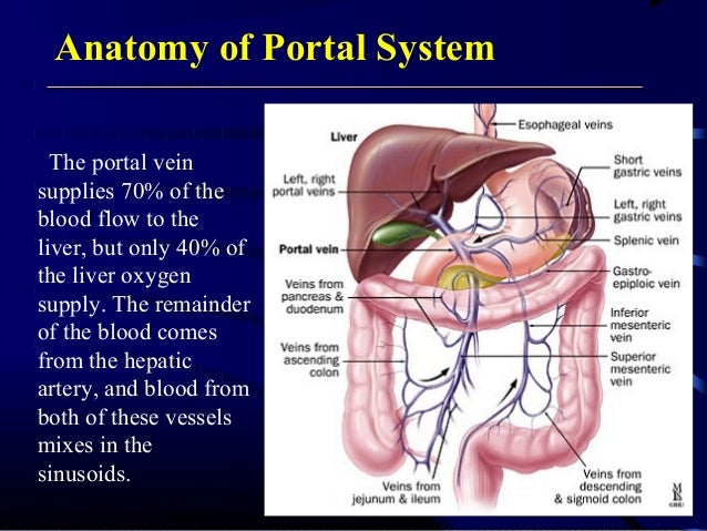 Portal Hypertensionassification And Pathophysiology