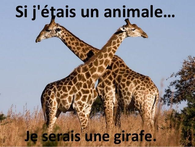 Si jétais un animale… Je serais une girafe.