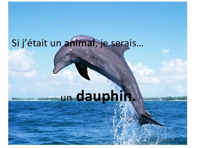 Si j'était un animal, je serais…           un   dauphin.