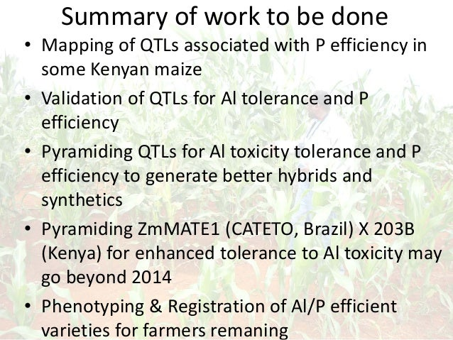 Summary of work to be done • Mapping of QTLs associated with P efficiency in some Kenyan maize • Validation of QTLs for Al...