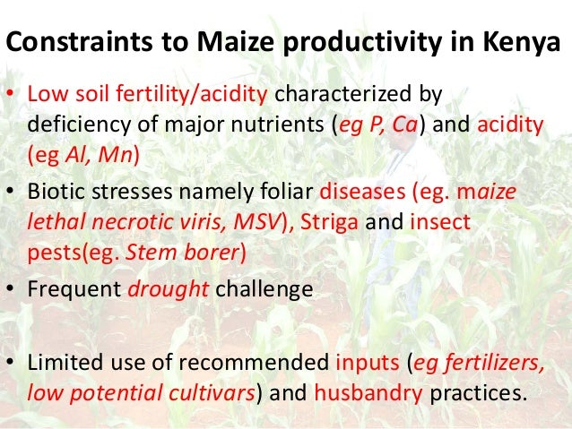Constraints to Maize productivity in Kenya • Low soil fertility/acidity characterized by deficiency of major nutrients (eg...