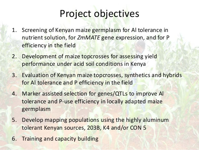 Project objectives 1. Screening of Kenyan maize germplasm for Al tolerance in nutrient solution, for ZmMATE gene expressio...