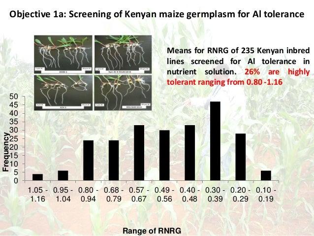 Objective 1a: Screening of Kenyan maize germplasm for Al tolerance 0 5 10 15 20 25 30 35 40 45 50 1.05 - 1.16 0.95 - 1.04 ...