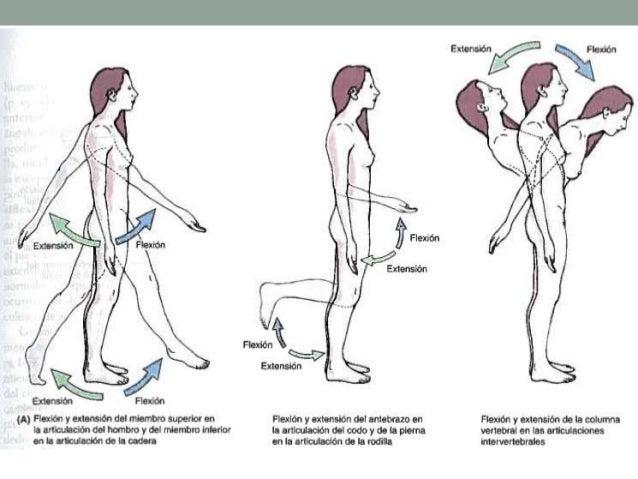 De los ejercicios el aumento del pene
