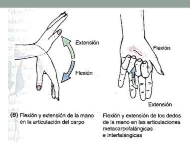 Posicion anatomica, planimetria y terminos