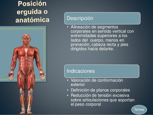 Posiciones anatómicas-básicas