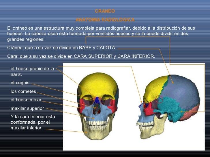 CRANEO                                 ANATOMIA RADIOLOGICAEl cráneo es una estructura muy compleja para radiografiar, deb...