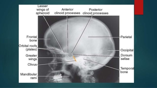 positioning of skull, Human Body