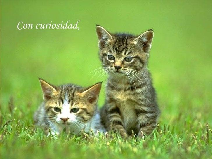 Con curiosidad,