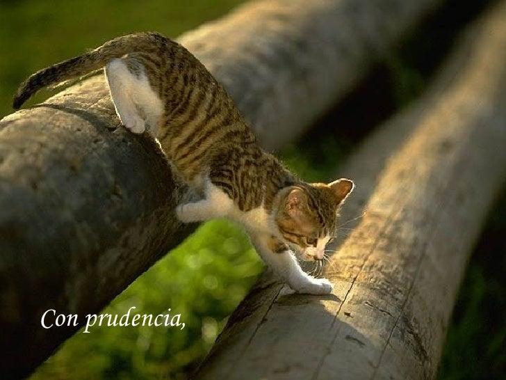 Con prudencia,