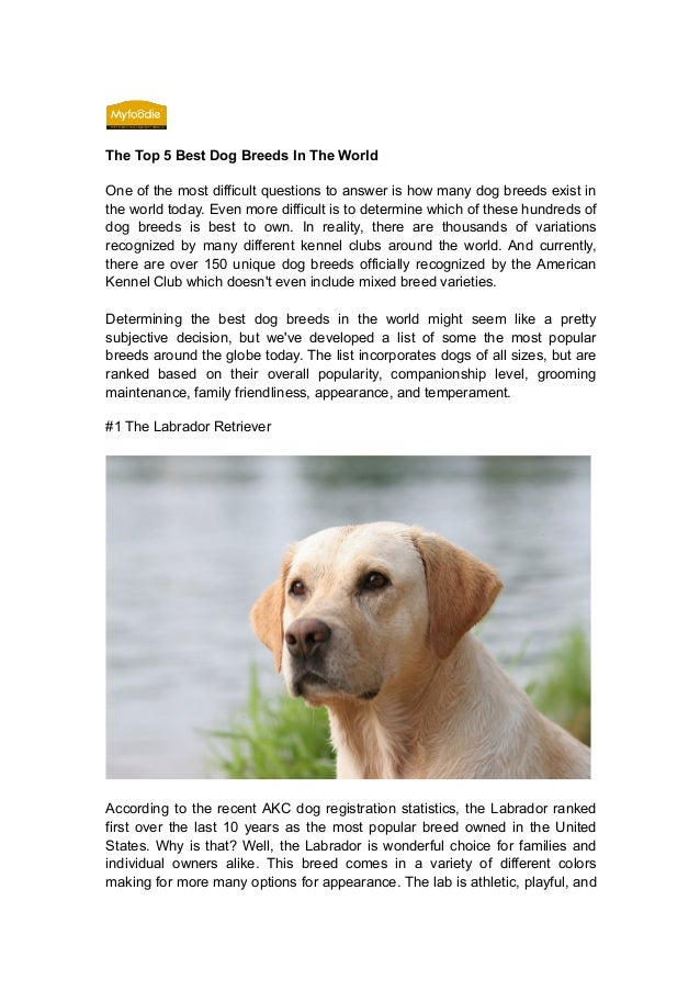 5 Best Emmy Beauty Looks You Will Want To Try In Real Life: Top 5 Best Dog Breeds In The World