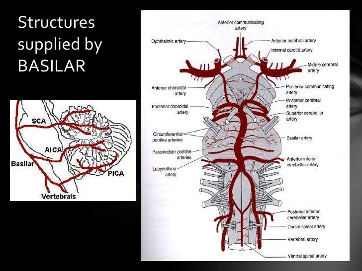 Posterior Circulation Applied Anatomy