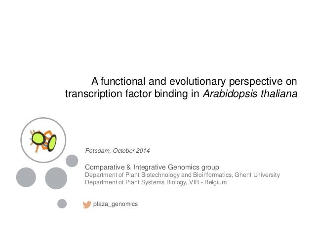 A functional and evolutionary perspective on transcription factor binding in Arabidopsis thaliana Potsdam, October 2014 Co...