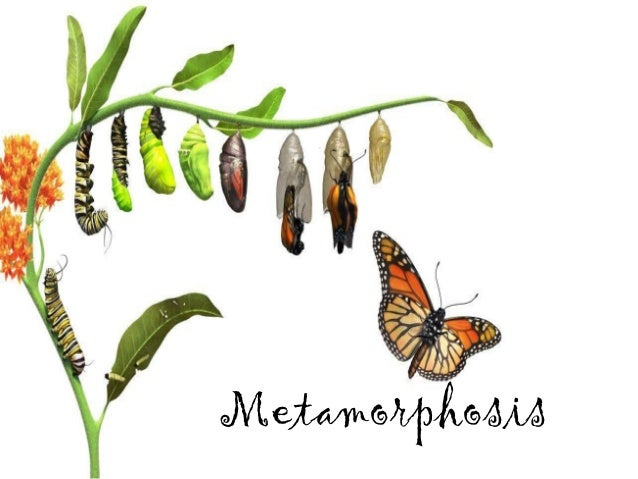 """the change on the main characters life in the metamorphosis Main character, gregor samsa, from """"metamorphosis"""", the presence of the vowel """"u"""", repeated twice in it best renders the """"limiting condition'' characteristic for the main character's life his damnation is also caused by his own """"spiritual chemistry"""" (chira, 63) his can see me while i am changing / i change myself but who."""