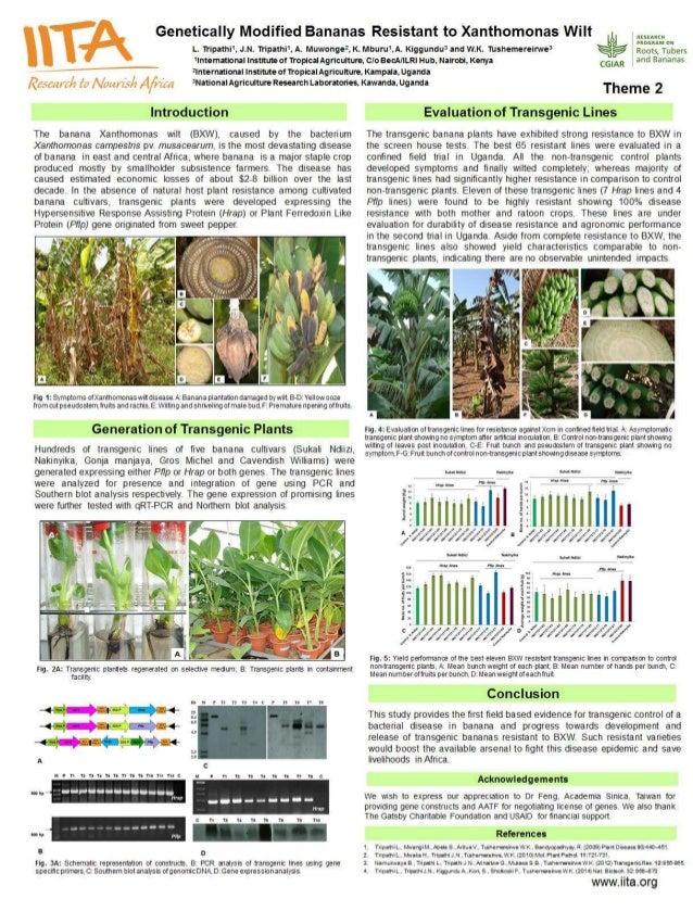 Genetically Modified Bananas Resistant to Xanthomonas Wilt  L.  Tripathit,  J. N. Tripathi',  A.  Muwonge2, K.  Mburu1,A. ...