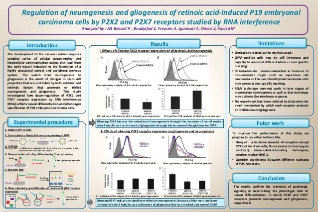 Regulation of neurogenesis and gliogenesis of retinoic acid-induced P19 embryonal carcinoma cells by P2X2 and P2X7 recepto...