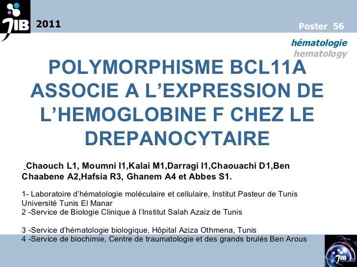 2011 hématologie hematology Poster  56 POLYMORPHISME BCL11A ASSOCIE A L'EXPRESSION DE L'HEMOGLOBINE F CHEZ LE DREPANOCYTAI...