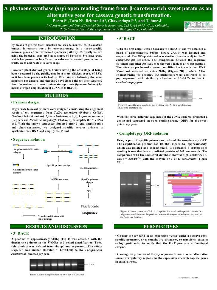 A phytoene synthase (psy) open reading frame from β-carotene-rich sweet potato as an                 alternative gene for ...