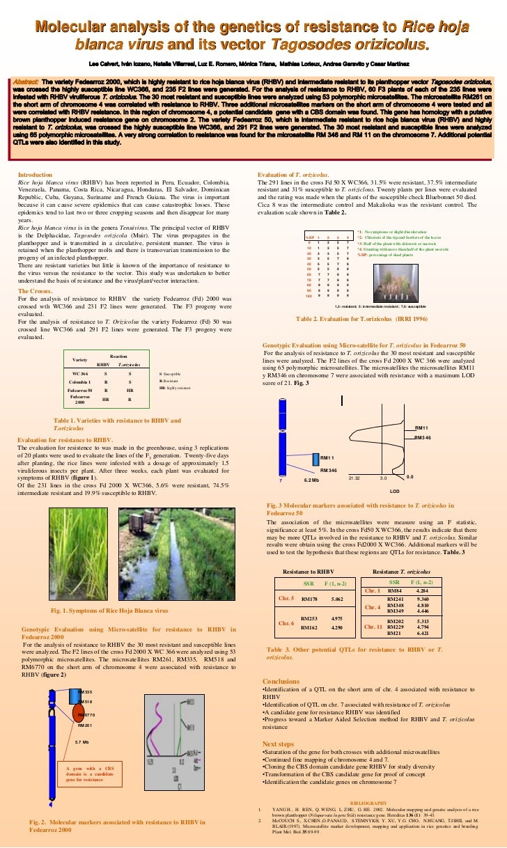 Molecular analysis of the genetics of resistance to Rice hoja               blanca virus and its vector Tagosodes orizicol...