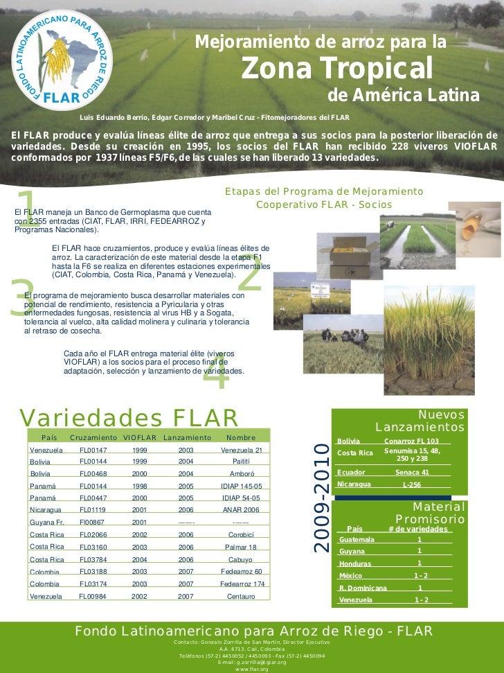 Mejoramiento de arroz para la                                                                          Zona Tropical      ...