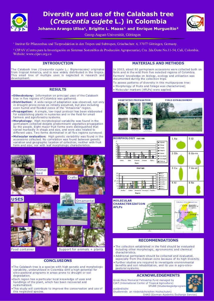 Georg-August-Universität, Göttingen Diversity and use of the Calabash tree ( Crescentia cujete  L.) in Colombia Johanna Ar...