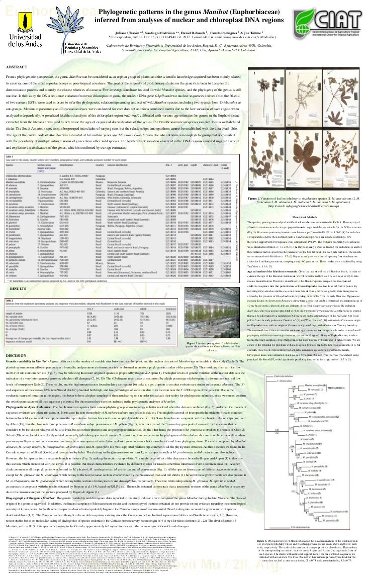 ABSTRACT From a phylogenetic perspective, the genus  Manihot  can be considered as an orphan group of plants, and the scie...