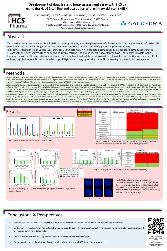 Development of double stand break assessment assay with HCS by using the HepG2 cell line and evaluation with primary skin ...