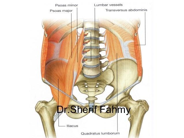 Posterior abdominal wall anatomy of the abdomen drerif fahmy ccuart Gallery