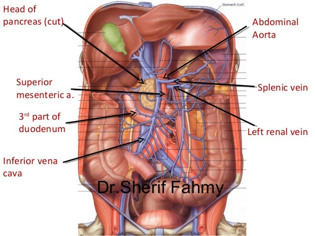 posterior abdominal wall (anatomy of the abdomen), Human Body