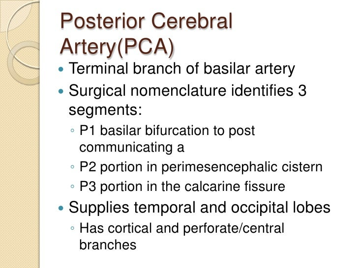 Posterior Cerebral Circulation Gross Anatomy