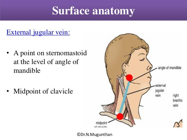 Posterior triangle of neck - Powerpoint lecture notes by ...