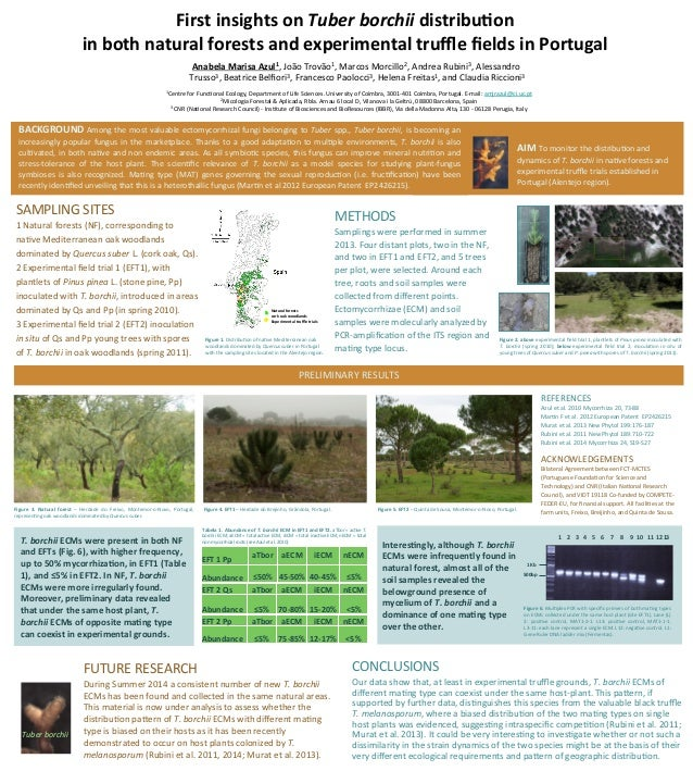 First  insights  on  Tuber  borchii  distribu.on     in  both  natural  forests  and  experimental...