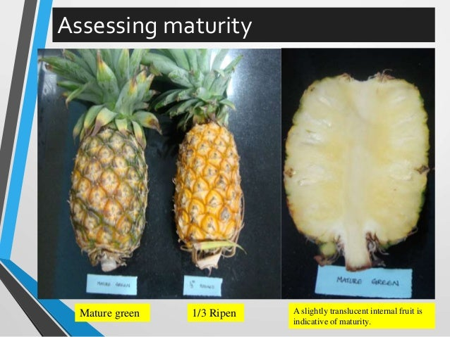 post harvest management of fruits and Post harvest management for fresh fruits, vegetables and root crops - a guide for farmers there are two main functions of post harvest management: to.